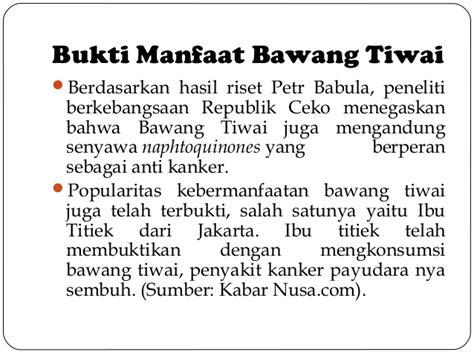 Bibit Stevia Bandung bawang tiwai
