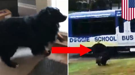 school for dogs dogs shows enthusiastic hopping onto doggie school