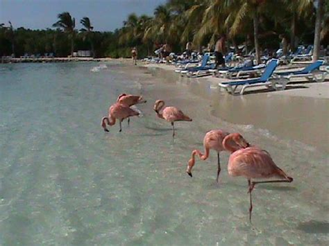 Bed And Breakfast Berkshires Flamingo Beach On The Private Island Picture Of