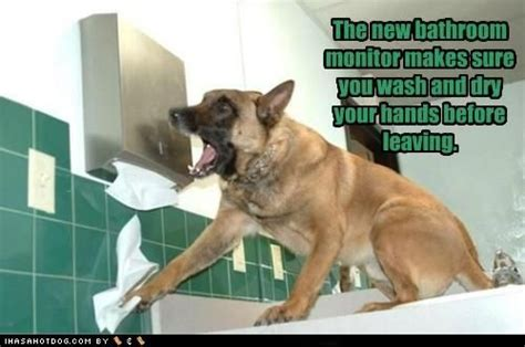 bathroom monitor bathroom monitor animals pinterest
