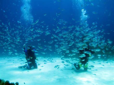 gozo dive scuba diving in malta gozo atlantis gozo