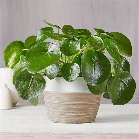 houseplants   buy  hgtv