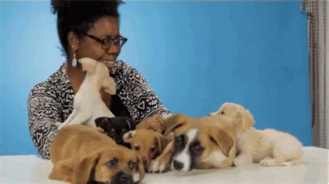 puppies buzzfeed puppies buzzfeed gif puppies buzzfeed discover gifs