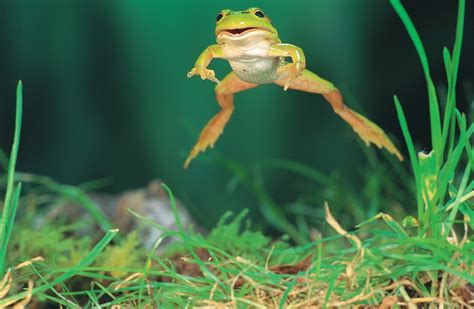 how to get rid of frogs in backyard how to get rid of frogs in backyard 100 how to get rid of frogs in backyard how to get