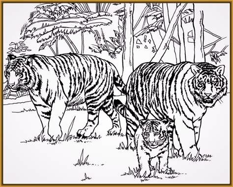 imagenes de tigres faciles para dibujar tigres para dibujar faciles para dibujar a lapiz fotos