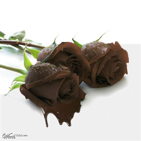 chocolate roses related keywords chocolate roses long tail keywords keywordsking