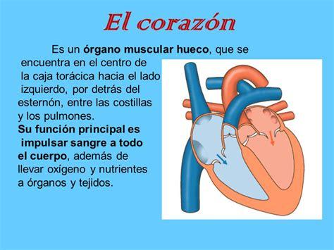 el corazan es un 6070743261 estructura y funci 243 n de los seres vivos sistemas del cuerpo humano ppt descargar