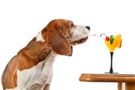 can dogs drink orange juice oranges for dogs 101 can dogs eat oranges