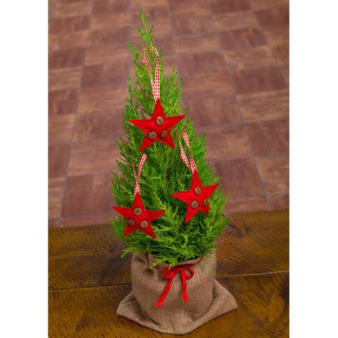 mini christmas tree send christmas plants bunches co uk