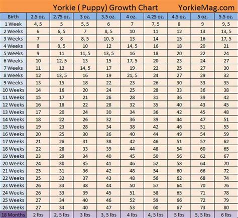 yorkie growth chart weight yorkie growth chart how big do yorkies get yorkiemag