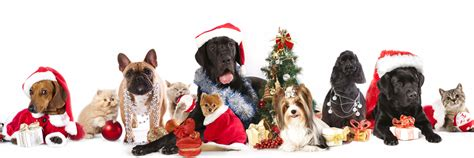 Christmas dog and cat shelter dogs to dream dogs christmas dog and cat