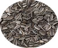 unshelled sunflower seeds for salad greens sprouting and