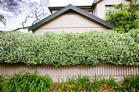Landscaping Small Backyard Best Climbing Plants Burke S Backyard