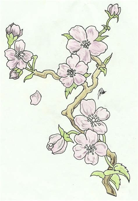 cherry blossoms branch sketch colored by faytofallstars