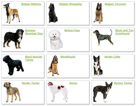 list   dogs breeds dog breeds list