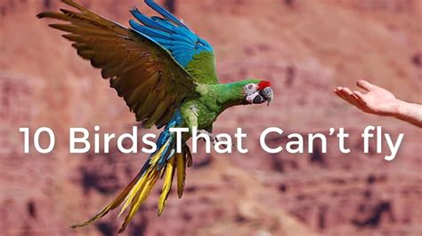 what is the only bird that can fly backwards 10 birds cannot fly names and images