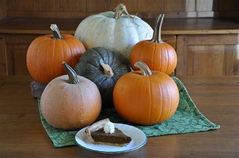 best pumpkins pumpkin taste reveals best choice for pie gardening