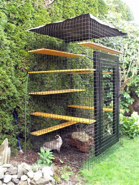 outside cages 17 best images about cat run on cat houses pvc pipes and room decorating