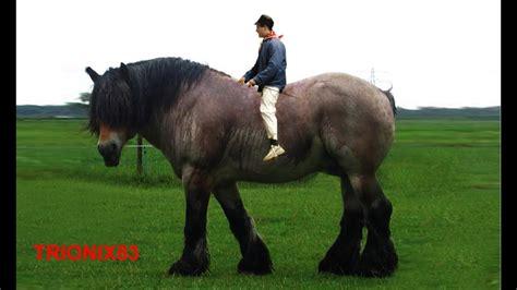 fotos de penes super finos el caballo mas fuerte del mundo los caballos mas fuertes