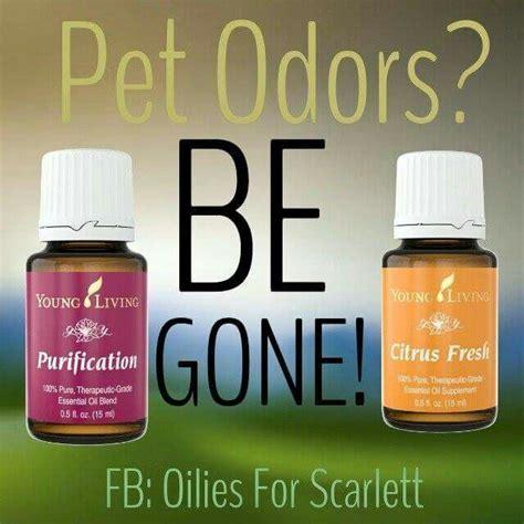 air purifier  pets  rid  awful pet odors