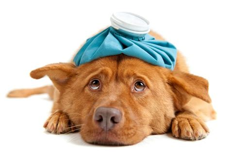 15 things not to do with a puppy books the top 8 toxic foods your pets should not eat jet pet
