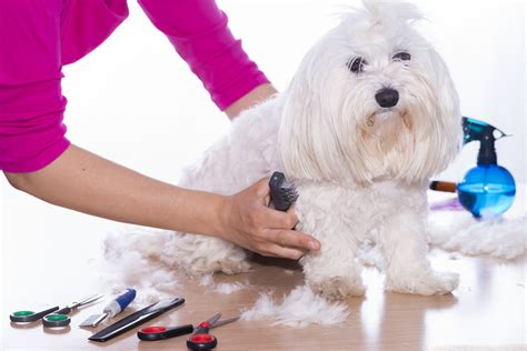 dog house grooming dog grooming supplies 101 the ultimate buyers guide