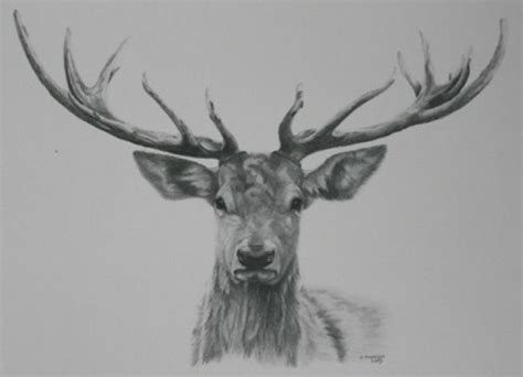 tattoo prices red deer related keywords suggestions for stag art