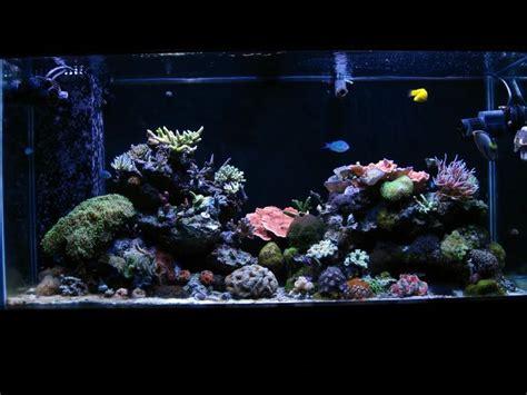 live rock aquascape designs 123 best images about aquarium ideas on pinterest online