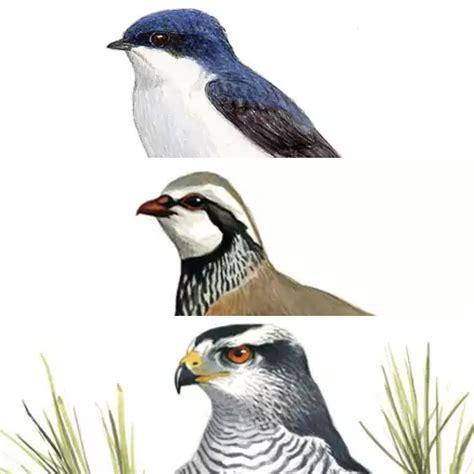 imagenes animales aves la ciencia de la vida pueblos con nombres de animales 4