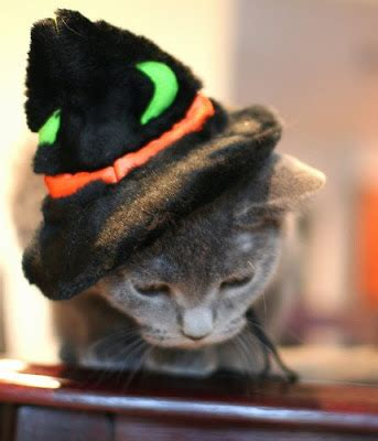 wizard cat new york chique