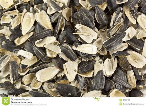 empty shells of sunflower seeds stock photo image 32337156