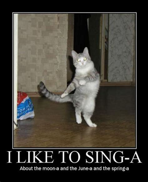 Singing Cat Meme - photo porter funny cat images funny images of cats