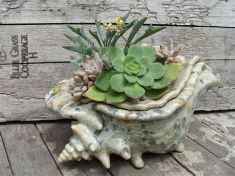 Conch Shell Planter by Conch Sea Shell Planter