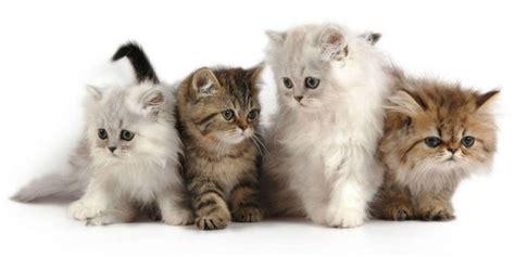 cat untuk wallpaper bunda yang punya kucing jangan pernah kasih ini ke