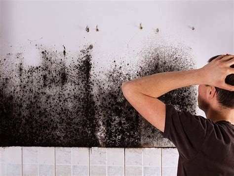 how to get rid of mold in a basement get rid of black mold safely