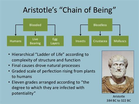 aristotle biography sparknotes visualizing evolution
