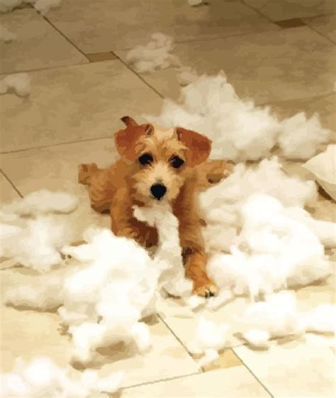 puppy behavior destructive behavior in puppies infolific