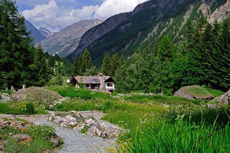 il giardino delle api testo la vita delle piante in montagna parco nazionale gran