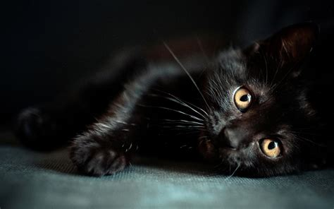 baby black cats with green eyes wallpaper