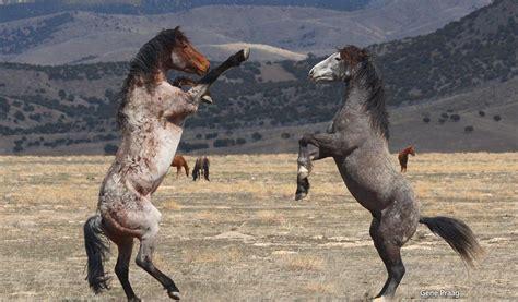 mujer es cogida por un burro mujer cogida por caballo pony mujer cojiendo con burro