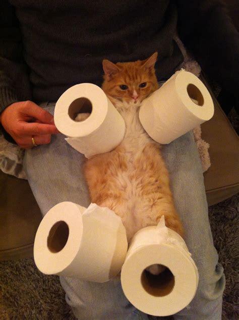 cat wallpaper rolls cat toilet paper holder rasmus zwickson flickr