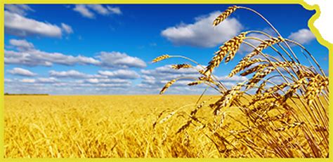 Kansas Number Search Related Keywords Suggestions For Kansas Wheatfield