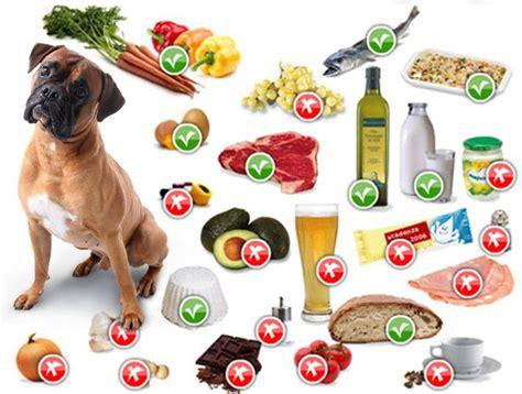 boxer alimentazione consigli alimentari corso