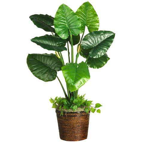 Bild Mit Echten Pflanzen by Free Plant Free Clip Free Clip On
