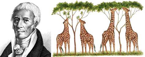 imagenes de las jirafas de lamarck biolog 237 a y geolog 237 a 4 186 eso la historia de la tierra