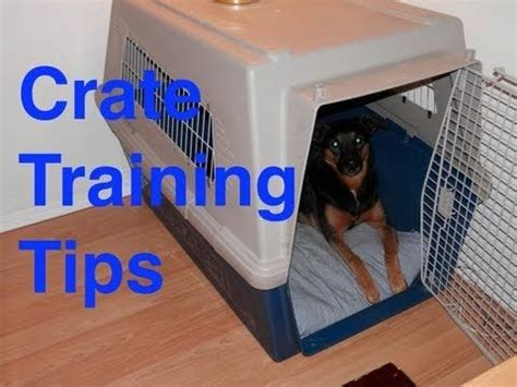 crate training crate training dog training and training tips on pinterest