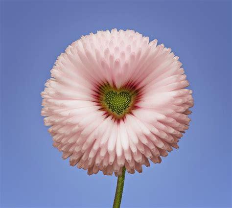 imagenes de rosas blancas naturales colecci 243 n de fotos de flores exoticas naturales muy