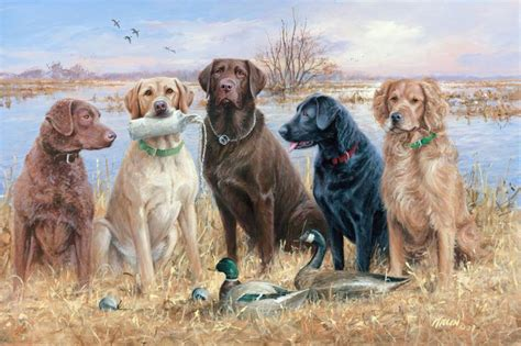 duck puppy duck dogs duck desktop wallpapers with waterfowl gallery duck