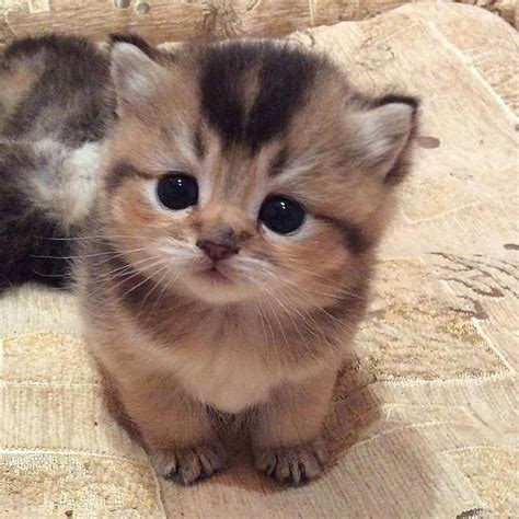 i love cats cute cat kitten pictures cute cat love cute cats cat animal and kitty