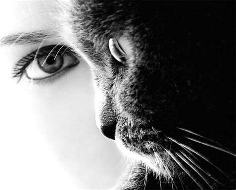 lettere di donne che amano troppo non innamoratevi mai di una donna che ama i gatti una